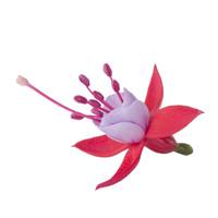 bella-fuchsia-nikita